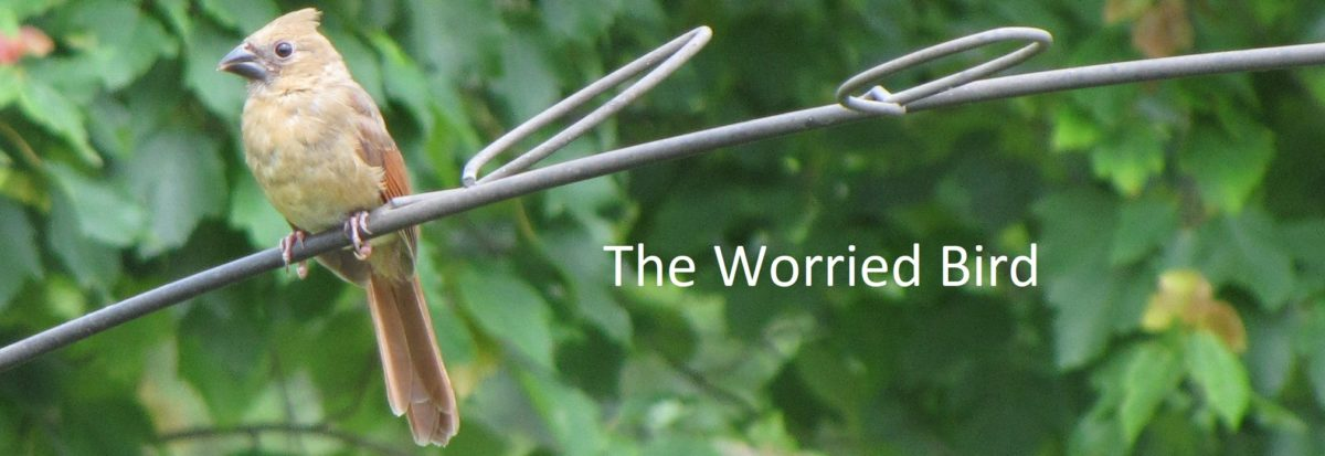 The Worried Bird